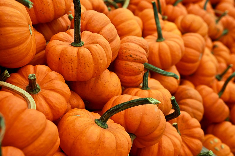 Halloween+can%27t+be+Halloween+without+pumpkins.+%28photo+credit%3Awikimediacommonsundercreativecommonslisence%29